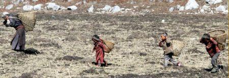 NJ Especial - Infância roubada: a triste realidade e os efeitos nefastos do trabalho infantil (imagem 7)