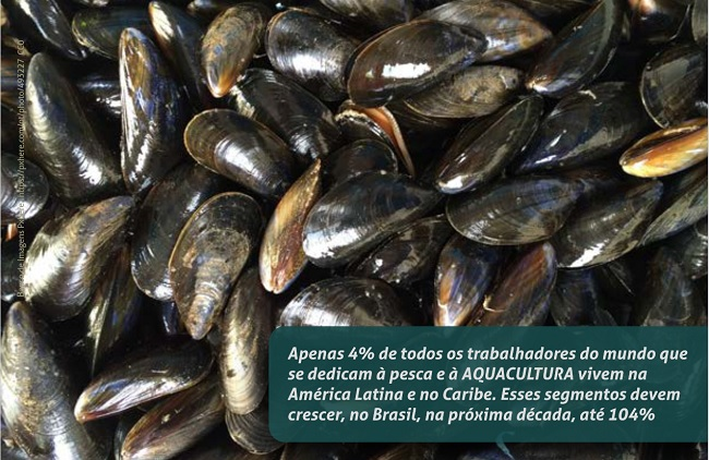 Foto com vários mexilhões. Sobre a foto, na parte infeior direita, há uma tarja transparente com a seguinte mensagem: Apenas 4% de todos os trabalhadores do mundo que se dedicam à pesca e à AQUACULTURA vivem na América Latina e no Caribe. Esses segmentos devem crescer, no Brasil na, próxima década, até 104%.