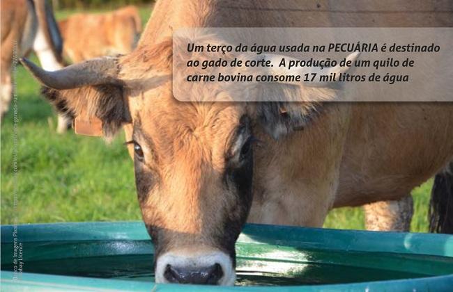 Foto de uma vaca bebendo água em uma tina. Sobre a foto, na parte superior direita, há uma tarja transparente com a seguinte mensagem: Um terço da água usada na PECUÁRIA é destinado ao gado de corte.  A produção de um quilo de carne bovina consome 17 mil litros de água.